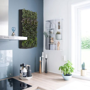 PlantWallBox - kitchen