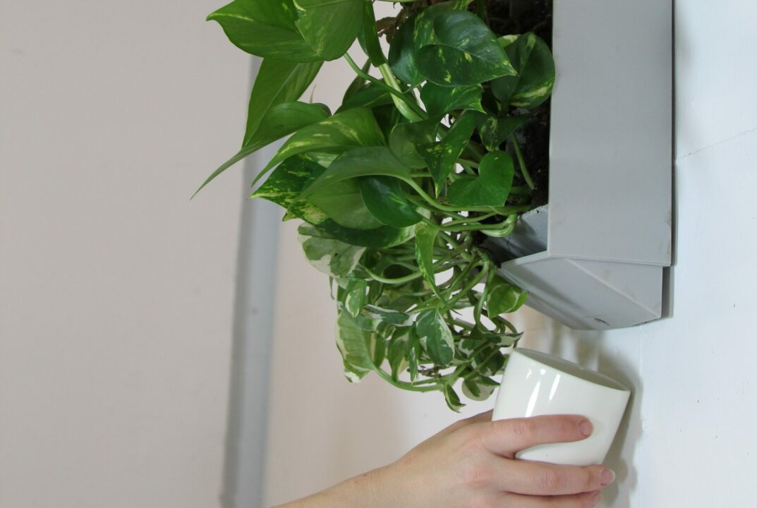 plant wall water drainage